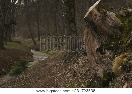 The Root Of A Tree Cut And A Spring Flowing Through The Forest
