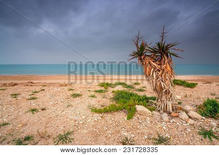 Green Agave Plant Against Beach And Ocean In Cloudy Day. Acharavi Village On Corfu Island. Greece