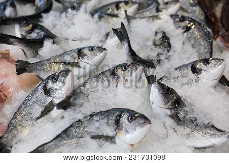 Frozen Sea Bass On Ice In The Greek Fish Shop Lined Up For Sale. Sea Bass Fishes On Ice. Horizontal.