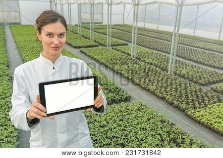 Female Biotechnology Engineer Tablet Greenhouse. Plant Seedlings Growing Greenhouse Spring.