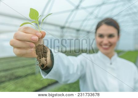 Woman Holding Plant In Greenhouse Nursery. Seedlings Greenhouse.