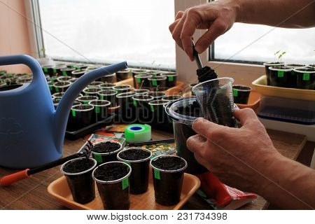 Gardener Puts Soil By Garden Tool In Container With Sticker For Sowing Seeds On Seedlings.