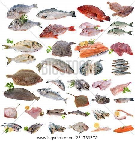 Group Of Fish In Front Of White Background