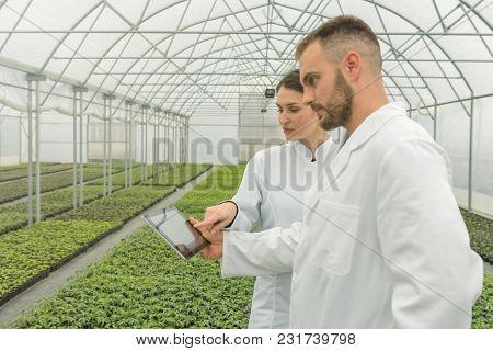 Agricultural Engineers Using Tablet Greenhouse. Seedlings Greenhouse.