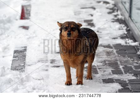 Homeless dog in the city at winter