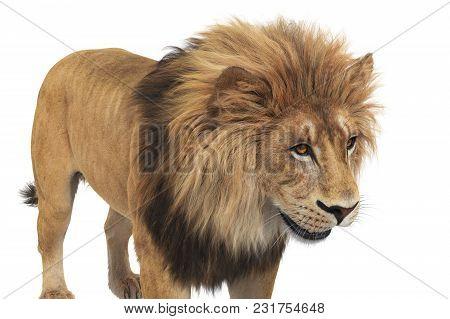 Lion Animal Beige Leo Big Dangerous Carnivore, Close View. 3d Rendering