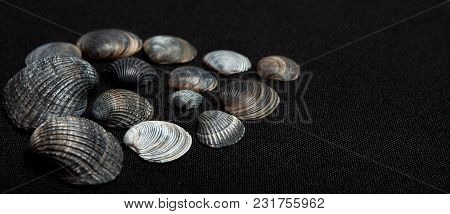 Set Of Sea Shells On A Black Background, Place For Text.