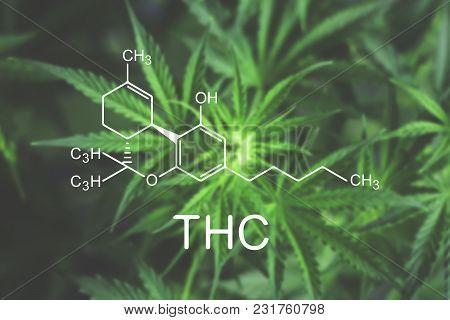 Thc Flower Of Marijuana Macro At The Beginning Flowering Beautiful Background