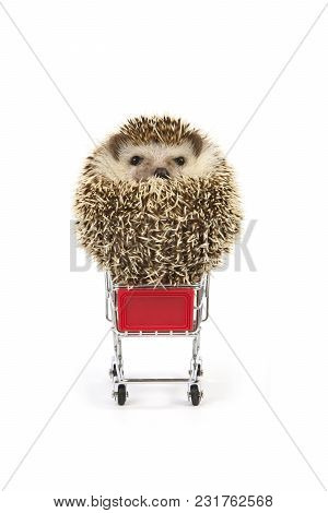 Front View Of Little Hedgehog Sitting Like Ball On Shopping Cart On White Background.