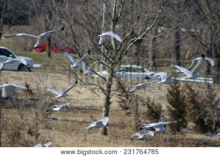 Large Flock Of Seagulls Witnessed On March Of 2018 In Canada