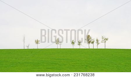 Trees On A Vast Green Spring Field, Against Cloudy Sky.