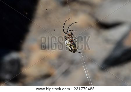 Big Insect Spider And Web Into The Wild