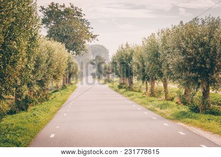 Beautiful Road Surrounded By Green Trees In Marken The Netherlands