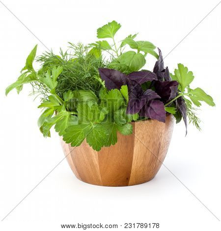 Fresh spices and herbs in wicker basket isolated on white background cutout. Sweet basil, red basil leaves, dill and parsley.