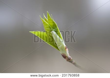 A Beautiful Small Delicate First Spring Bud On A Tree Branch
