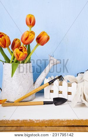 Garden Tools And Bouquet Of Tulips On The Table. Getting Ready For Planting Vegetables.