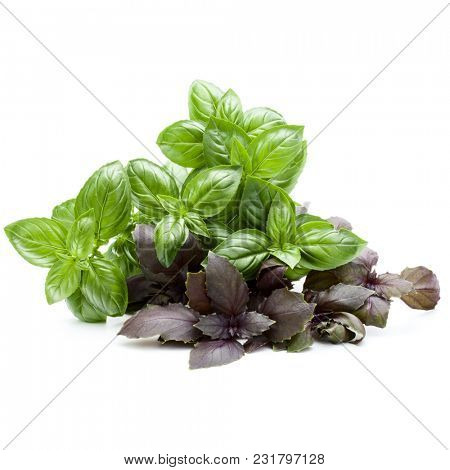 Varieties of basil bouquet isolated on white background cutout.