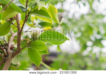Natural Background - Tree Branch With Leaves And Cone
