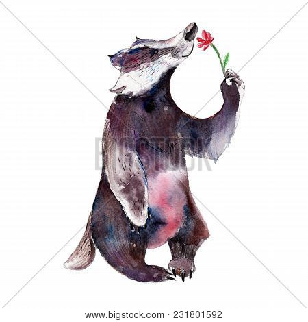 Badger With Flower, Watercolor Hand-drawn Animal Illustation. Isolated Object  On White Background.