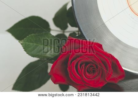 Vinyl Record Disk And A Red Rose Close-up With Copyspace