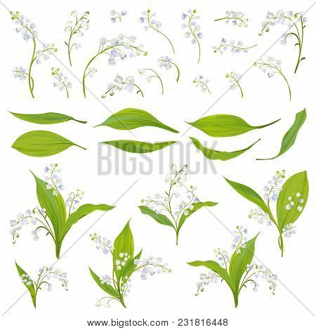 Lily Valley Hand Drawn Watercolor Flowers, Leaves And Floral Elements For Decoration, Wedding, Wallp