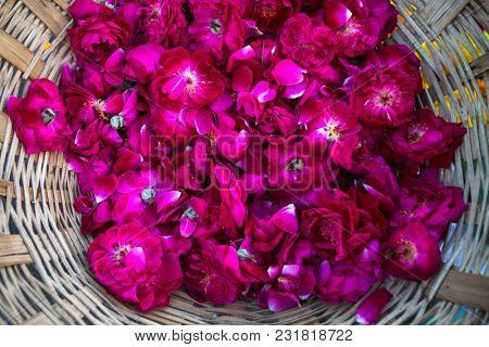 Flower petals for puja ceremony on the banks of Ganga river in Varanasi, India.