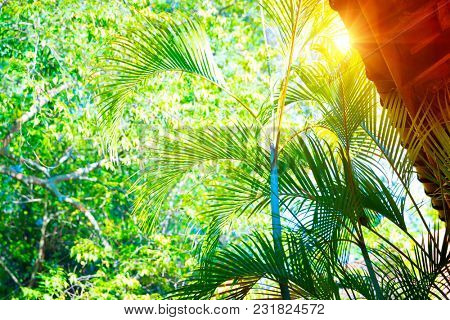 Temple in Sri Lanka, roof of a building over fresh green palm leaves background, peaceful and spiritual atmosphere, positive vibrations
