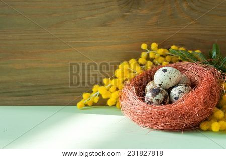 Easter Festive Background. Easter Eggs In The Nest Near The Mimosa Flowers, Free Space For Festive E
