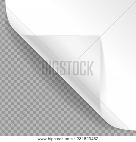 Realistic Detailed 3d White Curved Corner On A Transparent Background Flipping Or Reverse Paper. Vec