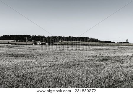 Wilted Sunflower Fields And Poor Farmhouse On The Arable Land After Harvesting In France