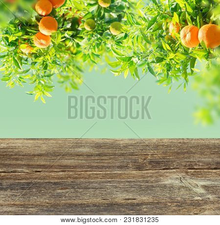 Garden With Orange Tree Branches Over Blue Sky And Wooden Table