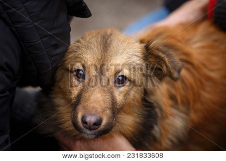 The Unfortunate Redheaded Dog. People Help Homeless Animals. The Problem Of Homeless Animals.