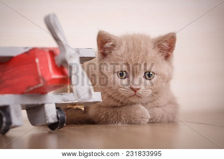 The Kitty Lies Near The Toy Plane. Young Cat Pilot. Good As Background, Wallpaper. The Cat Is Playin