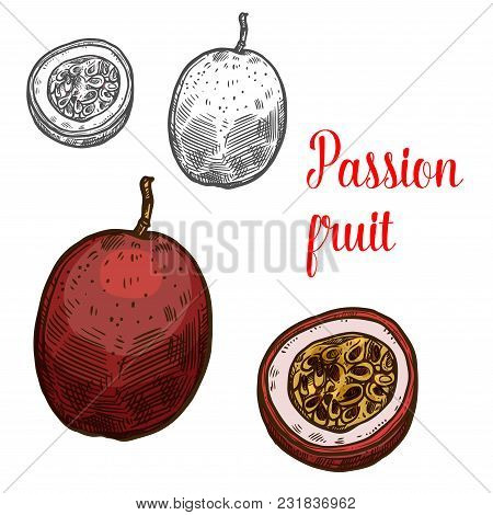 Passion Fruit Fruit Color Sketch Icon. Vector Isolated Symbol Of Fresh Whole And Slice Cut Exotic Tr