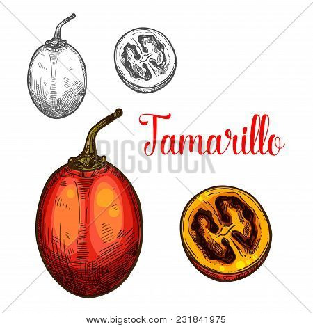 Tamarillo Fruit Sketch Color Icon. Vector Isolated Symbol Of Fresh Whole And Slice Cut Tamarillo Or