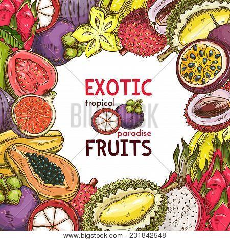 Exotic Fruits Sketch Poster Of Tropical Durian, Pitaya Dragon Fruit Or Guava And Papaya. Vector Desi