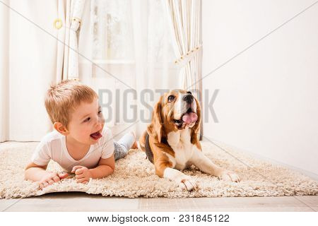 Young Boy Is Making Face With His Beagle In The White Carpet