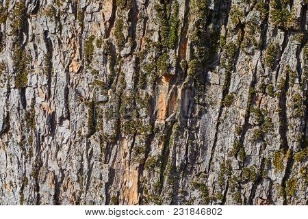 Bark texture of a tree trunk