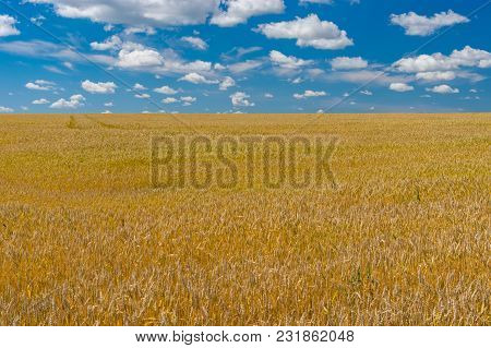 Classic Agricultural Summer Landscape With Ripe Wheat Field In Central Ukraine