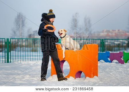 Man Is Training Labrador Dog In Winter On Sports Field For Dogs. Jumping Through Obstacles.