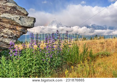 Blue Wild Flowers Of Medicinal Salvia On A Blurred Background Of Mountains, Clouds And Sky