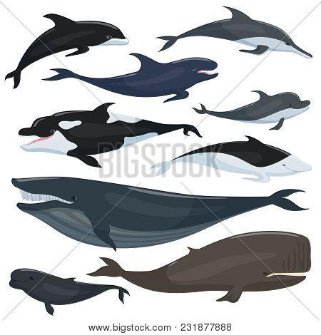 Nautical Collection Of Different Underwater Big Fishes And Mammals Animals. Underwater Fish Wildlife