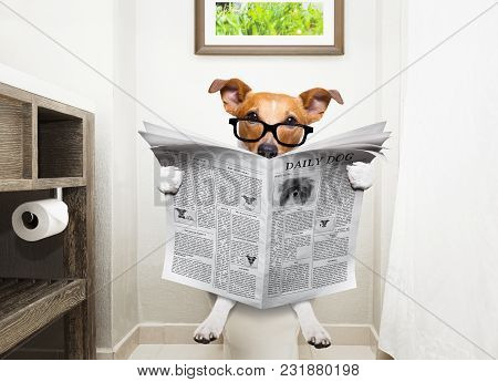 Jack Russell Terrier, Sitting On A Toilet Seat With Digestion Problems Or Constipation Reading The G