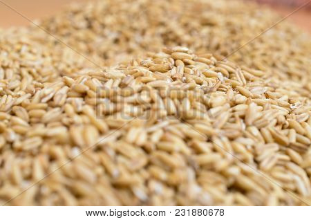 Grains Of Ripe Cereal Crops Are Scattered Chaotically On A Horizontal Surface.