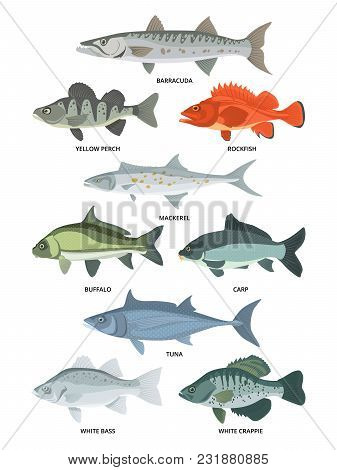 Cartoon Illustrations Of Freshwater And Ocean Fishes. Vector Collection Of Fish Wildlife, Crappie An