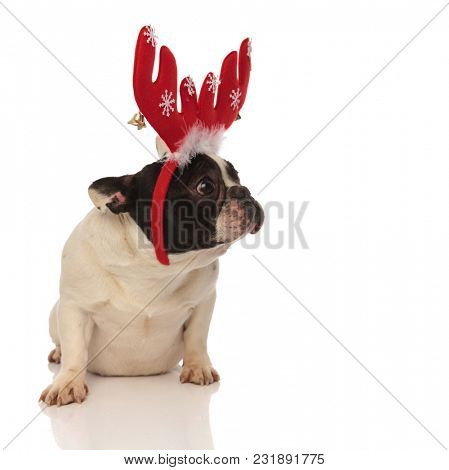 sad little french bulldog wearing christmas antlers while sitting on a white background