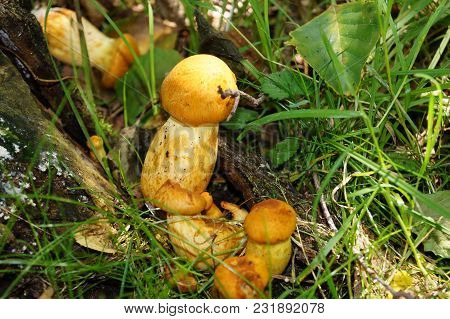 Toxic Wild Mushrooms Found In The Forest Next To Hamburg Germany