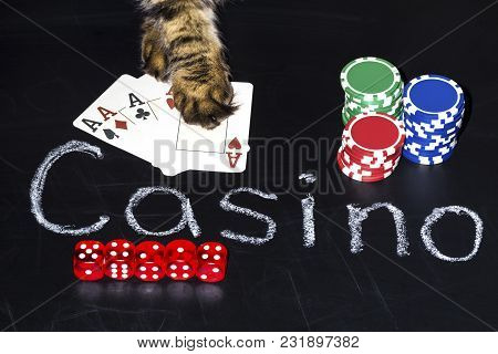 Accessories For Playing Poker On The Board With The Inscription Of The Casino, The Cat Takes The Jac