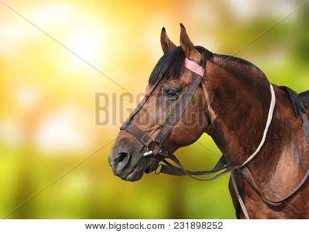 Portrait of a brown horse on green sunny background