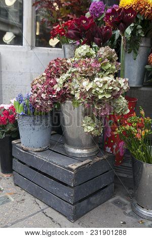 The Hydrangea In A Bucket For Sale